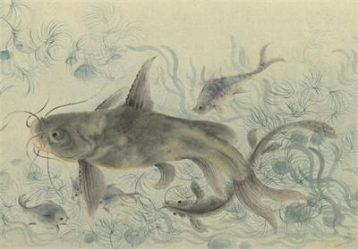 清 華嵒 群魚戲藻