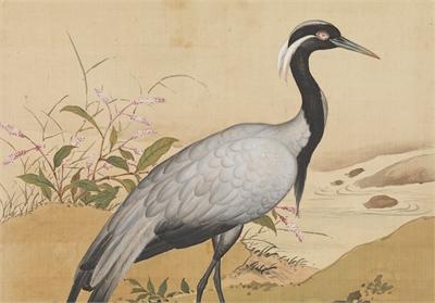 鳥譜 小灰鶴