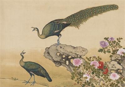 鳥譜 孔雀