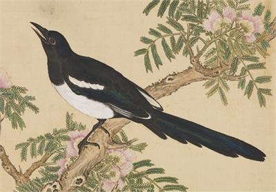 鳥譜 北喜鵲