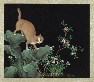 Cats and Butterflies of Longevity